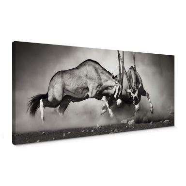 The Fight Canvas print panorama