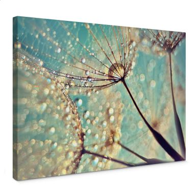 Canvas print Delgado - Magic dandelion