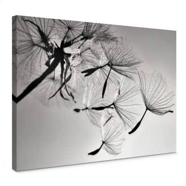 Canvas Print Delgado - Dandelion Freedom