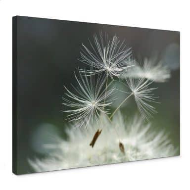 Canvas print Delgado - Dandelion diversity