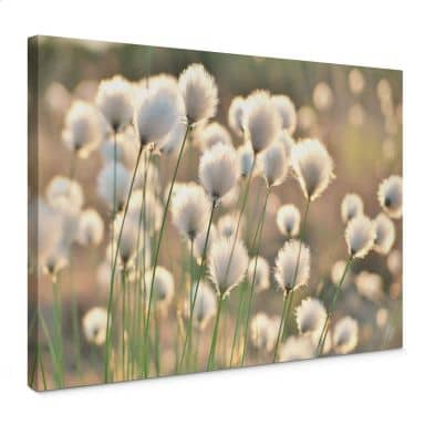Canvas Delgado - Flower Magic