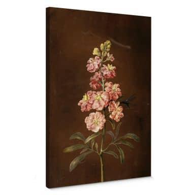 Dietzsch -  A pink Matthiola incana Canvas print