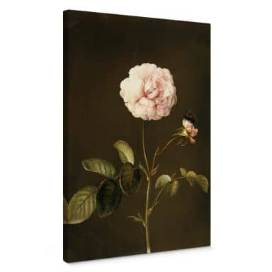 Dietzsch - French Rose with Hummel Canvas print