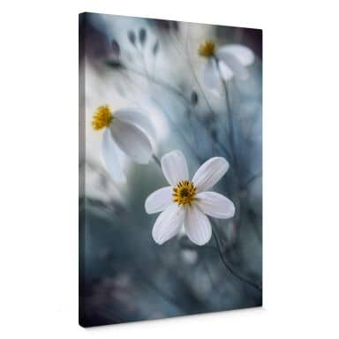 Tableau en toile Disher - Fleurs blanches