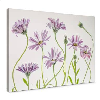 Canvas Picture Disher - Daisy