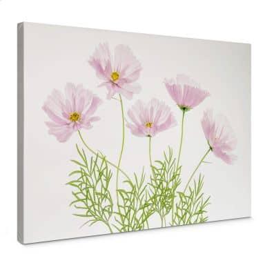 Leinwandbild Disher - Sommerblume