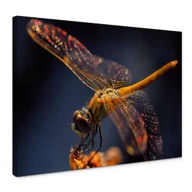 Leinwandbild Dufour - Libelle auf Tuchfühlung