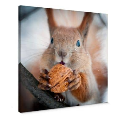 Squirrel with nut Canvas print square