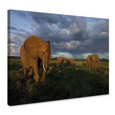 Leinwandbild NG Elefantenherde