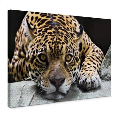 Tableau sur toile - Jaguar