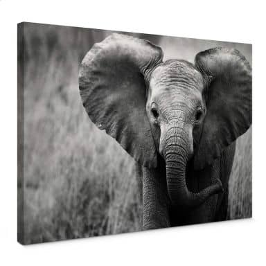 Leinwandbild Jumbo der kleine Elefant