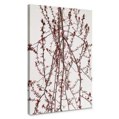 Canvas Print Kadam - Flora Almond Tree