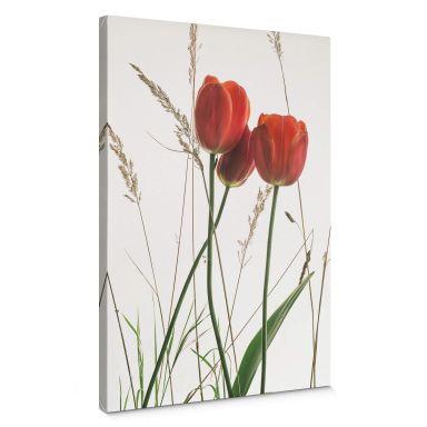 Leinwandbild Kadam – Flora Tulpe