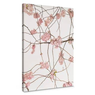Canvas Print Kadam - Cherry Blossom