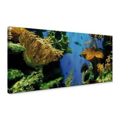 Leinwandbild Korallenriff