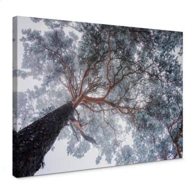 Leinwandbild Krivec - Baum im Winter