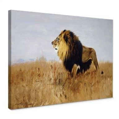 Leinwandbild Kuhnert - Löwe auf der Suche nach Beute