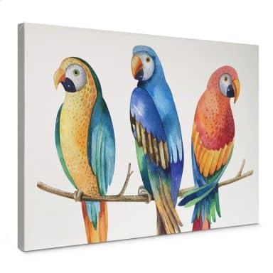 Leinwand Kvilis - Bunte Papageien