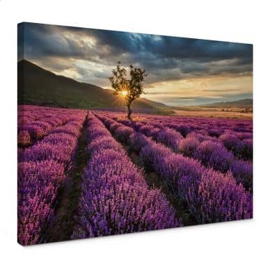 Lavender in the Provence Canvas print