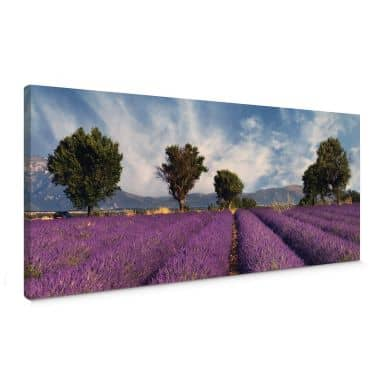 Lavender Field Panorama Canvas print