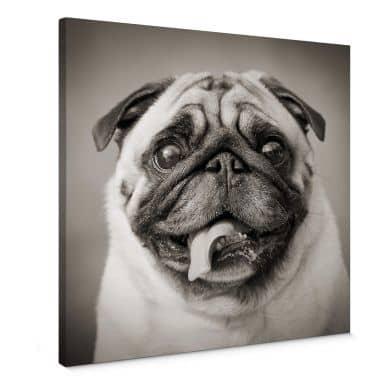 Sweet Pug Canvas print