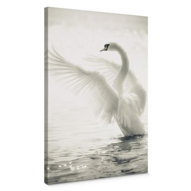 Majestic Swan Canvas print