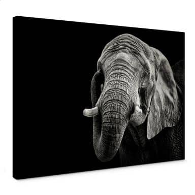 Leinwandbild Meermann - Der Elefant