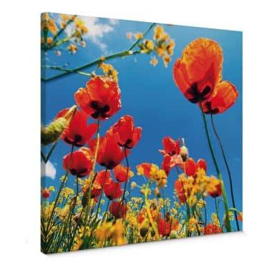 Leinwandbild Mohnblumen im Rapsfeld