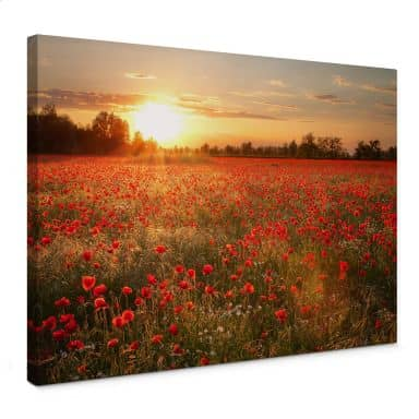 Poppy Field in Sunset Canvas print