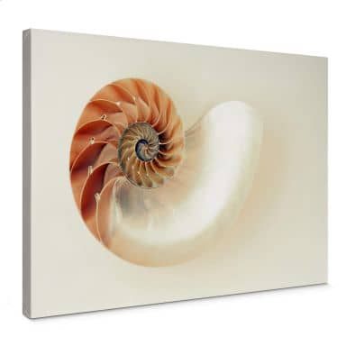 Leinwandbild Nautilus