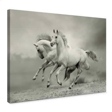 Horse in Gallop Canvas print