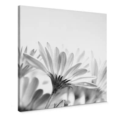 Daisy in Detail Canvas print