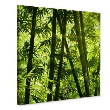 Leinwandbild Sonnenschein im Bambuswald - Quadratisch