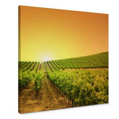 Canvas Print Vineyard sunset