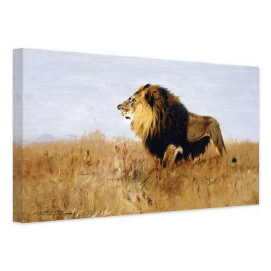 Leinwandbild 120x80cm auf Keilrahmen schwarzmweiß,grau,Löwin,Sahara,Savanne