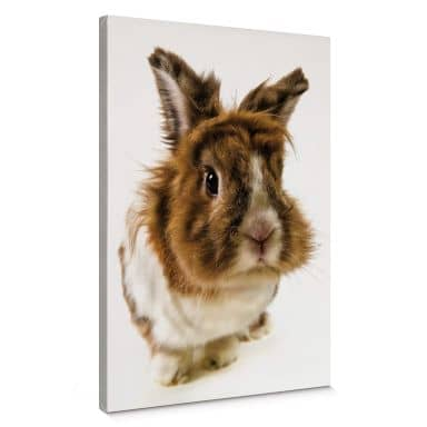 Leinwandbild Rabbit