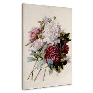 Leinwandbild Redouté - Strauss von roten, lila und weißen Pfingstrosen