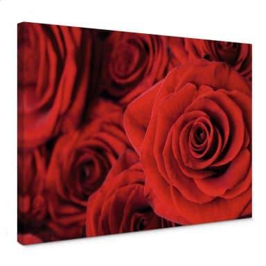 Leinwandbild Rose