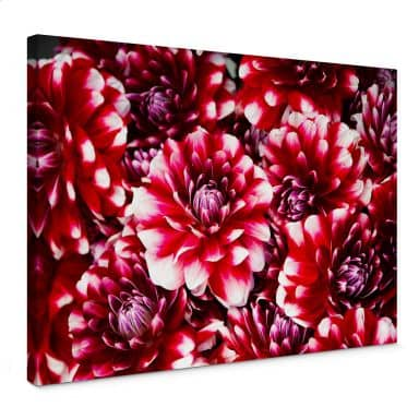 Leinwandbild Rote Blütenpracht