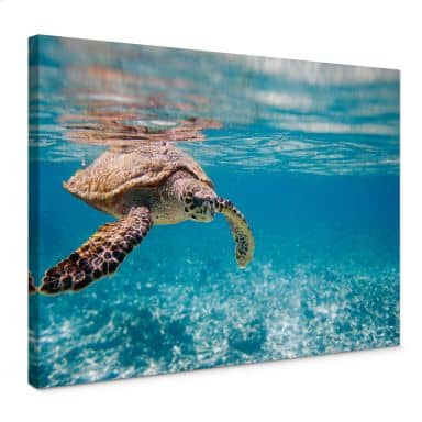 Traveling Turtle Canvas print