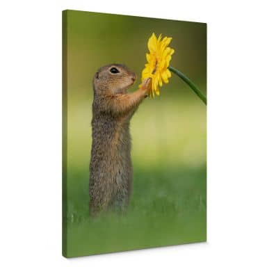 Canvas Print Dick van Duijn - Squirrel holding flower (portrait)