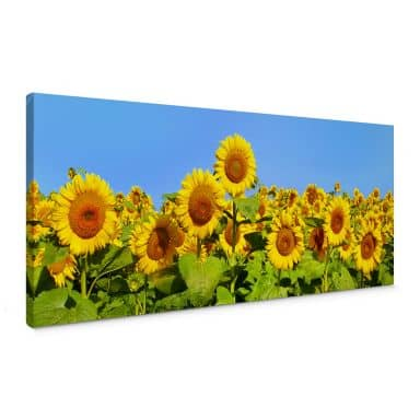 Sunflowers Canvas print panorama