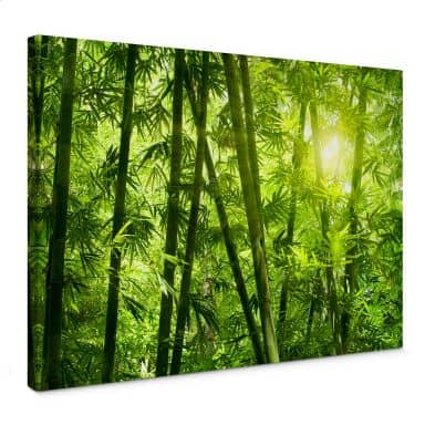 Sunshine in the Bamboo Forest Canvas print