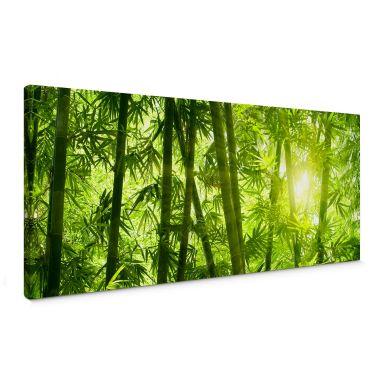 Leinwandbild Sonnenschein im Bambuswald - Panorama