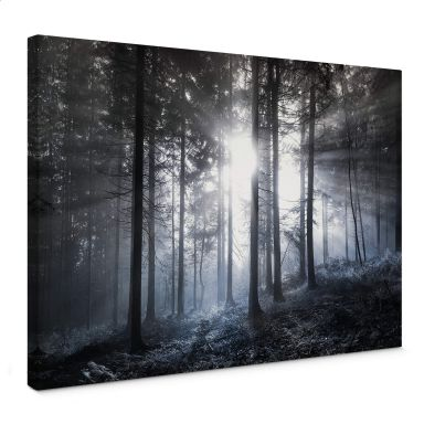 Leinwandbild Sonnenstrahlen im Wald Blau