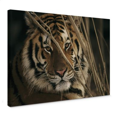 NG Tiger Canvas print
