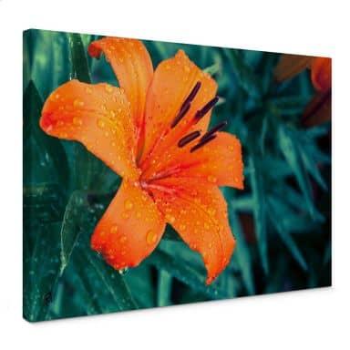 Leinwandbild Tropical Lily