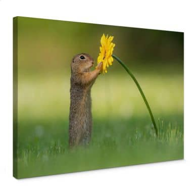 Canvas Print Dick van Duijn - Squirrel holding flower