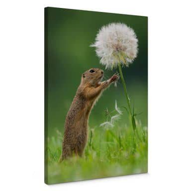 Canvas picture Dick van Duijn - Squirrel with dandelion