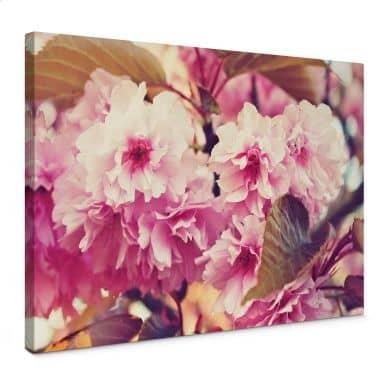 Leinwandbild Vintage Kirschblüten